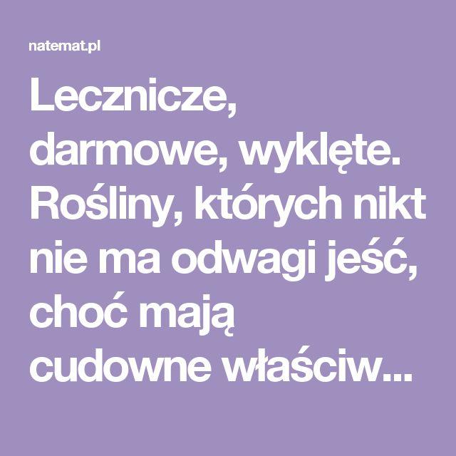 Lecznicze, darmowe, wyklęte. Rośliny, których nikt nie ma odwagi jeść, choć mają cudowne właściwości | naTemat.pl