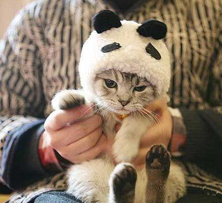 17 Best Images About Cats Personification On Pinterest