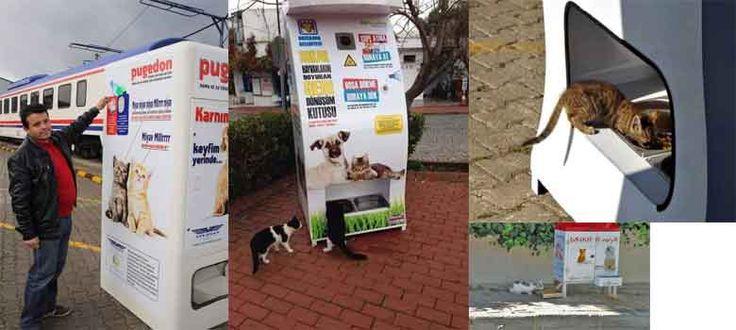 Hanya ada di Turki dimana anjing dan kucing mendapat jatah makanan dari pemerintah