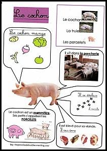 Fiche d'identité le cochon