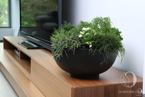 Комнатные цветы в интерьере #containerplants #homeplants #Rhipsalis #кашпо #горшечныецветы #plantsdesign #flowers
