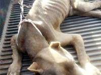 Anjing yang ditelantarkan sampai mati