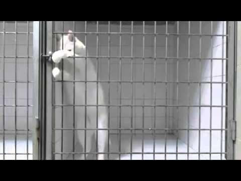 Gato escapista