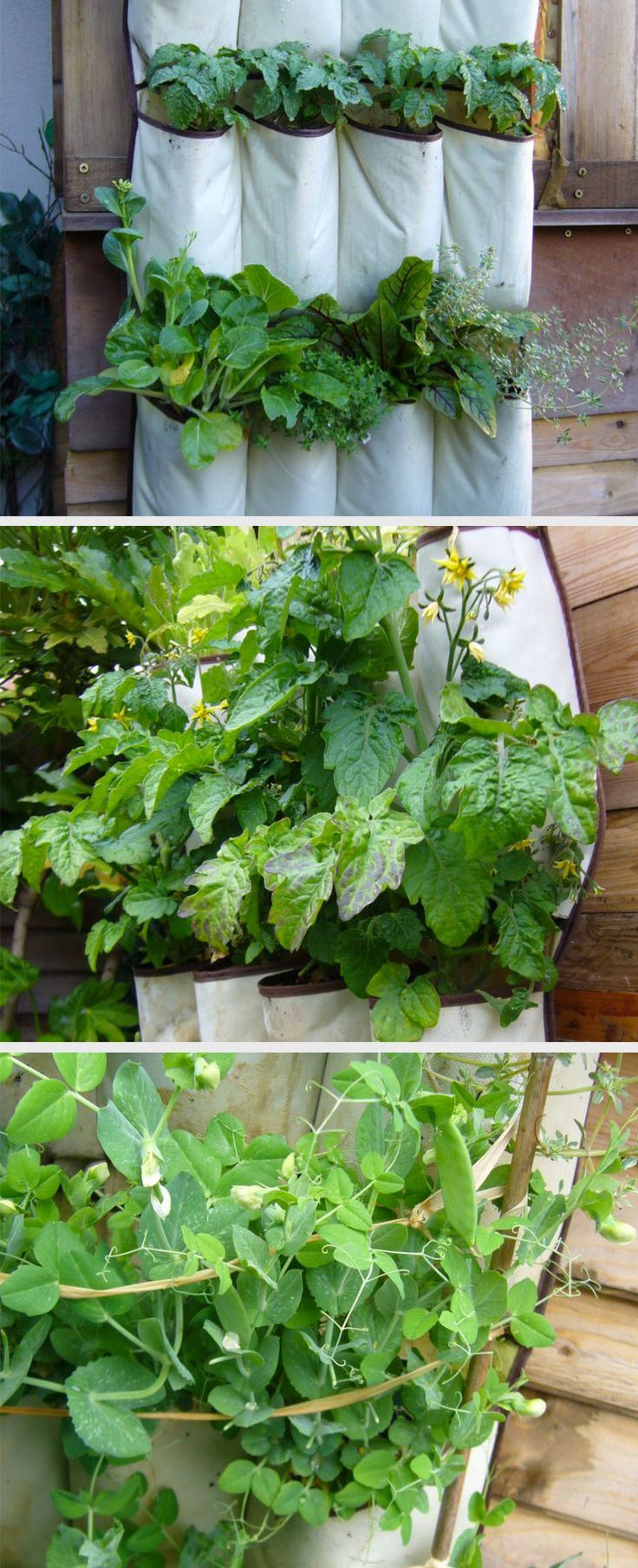 287 best gardening images on pinterest plants projects and