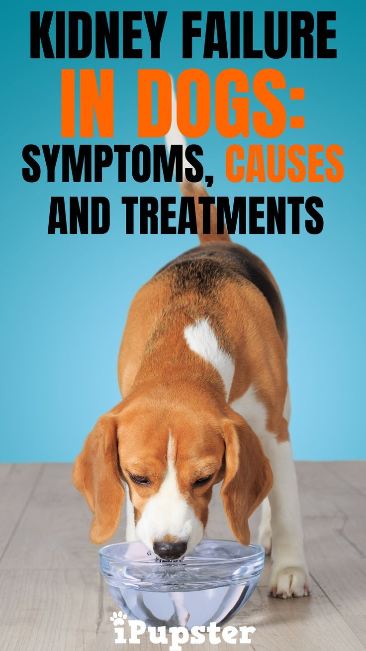 Pin On Health For Dogs