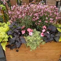 Kompozycje Kwiatowe Na Balkon I Do Ogrodu Container Flowers Flowers Hanging Baskets
