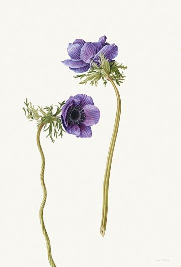 Rory McEwen's botanical art goes on display - Telegraph