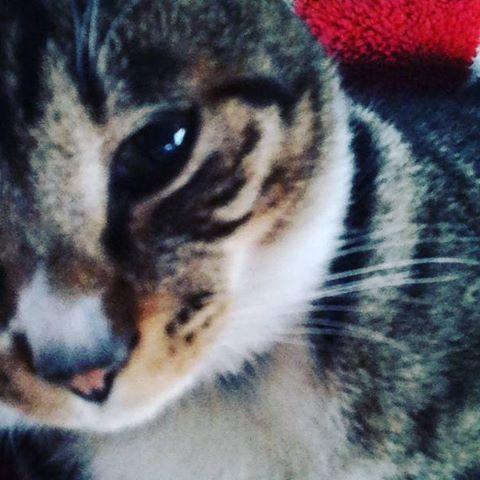 カメラ目線 #cat