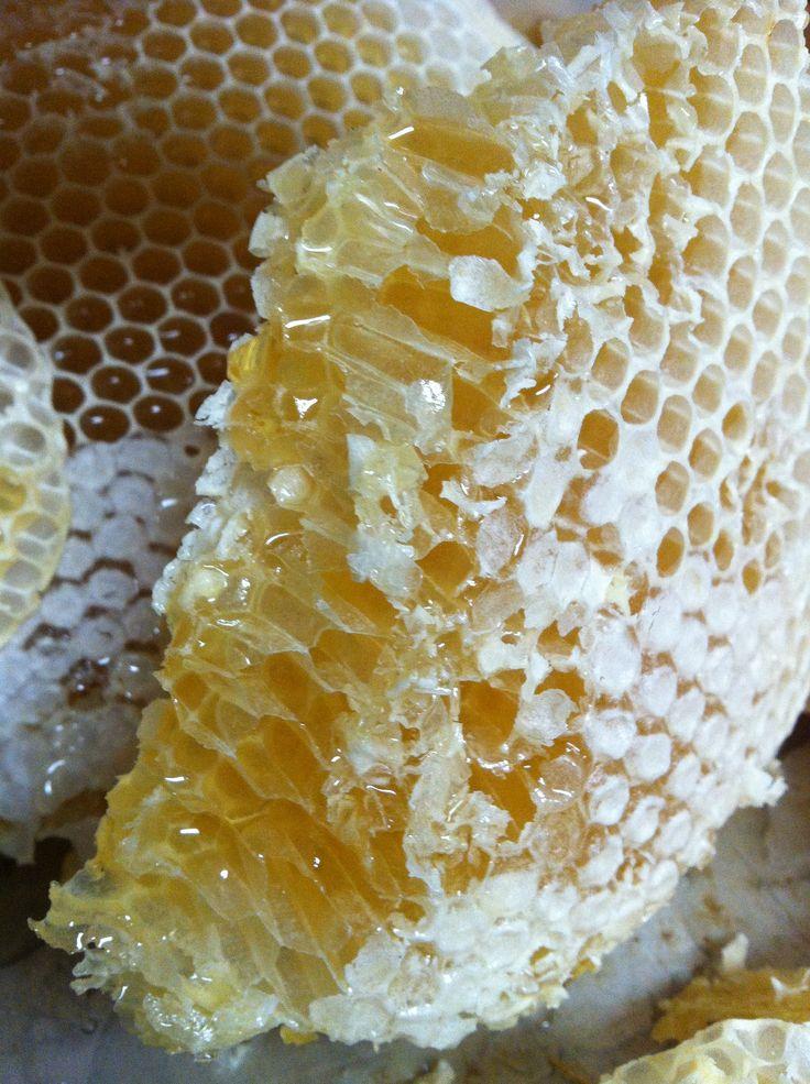 #natural skincare ingredients #raw honey #honeycomb #dirtybeautyskin