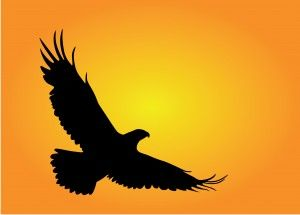 Flying Eagle Silhouette | Eagle Flying Silhouette The writing of finding eagle gone writing