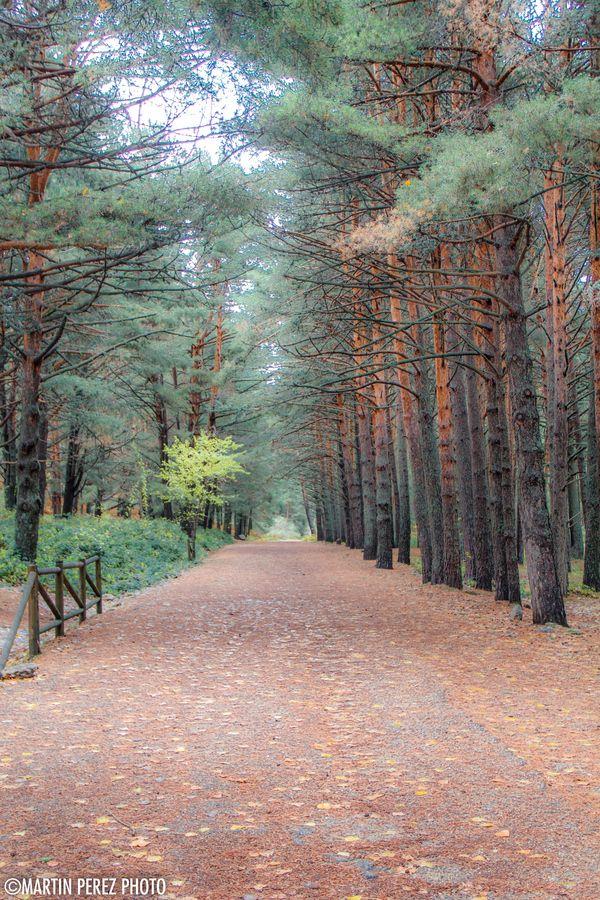 Paisaje de otoño en Cercedilla - Sierra de Guadarrama en Madrid