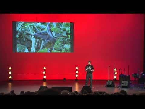 Ted talk about grey headed fly foxes