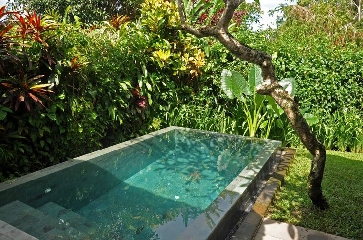 Tropical garden around plunge pool google search for Really cheap pools