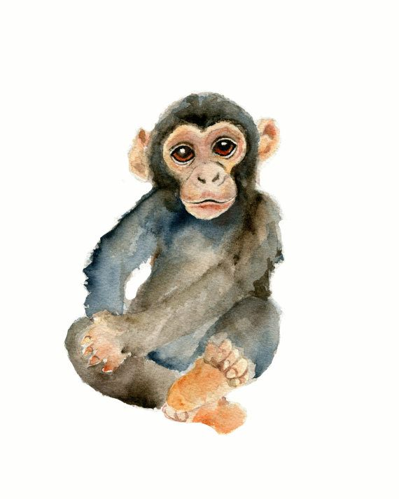 ****8 X 10 vertical print of a chimpanzee/ monkey from my original watercolor painting ***printed on Velvet fine art paper which has the