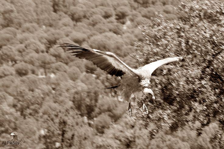 Aterrizando en Sierra Morena.....¿Te vienes?