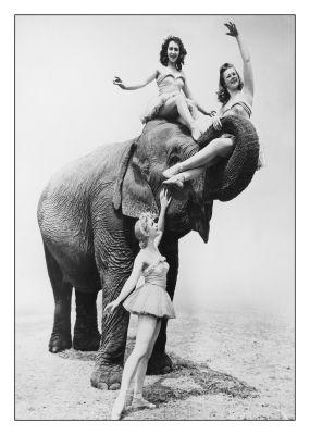 Dames op olifant blanco kaart van RETRO versturen bij Kaartwereld: 20% korting bij het maken van een gratis account.