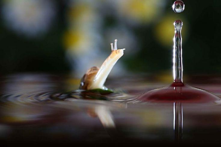La chiocciola e le gocce d'acqua: una storia d'amore