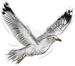 Image result for images seagulls flying