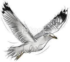 Image result for images seagulls flying