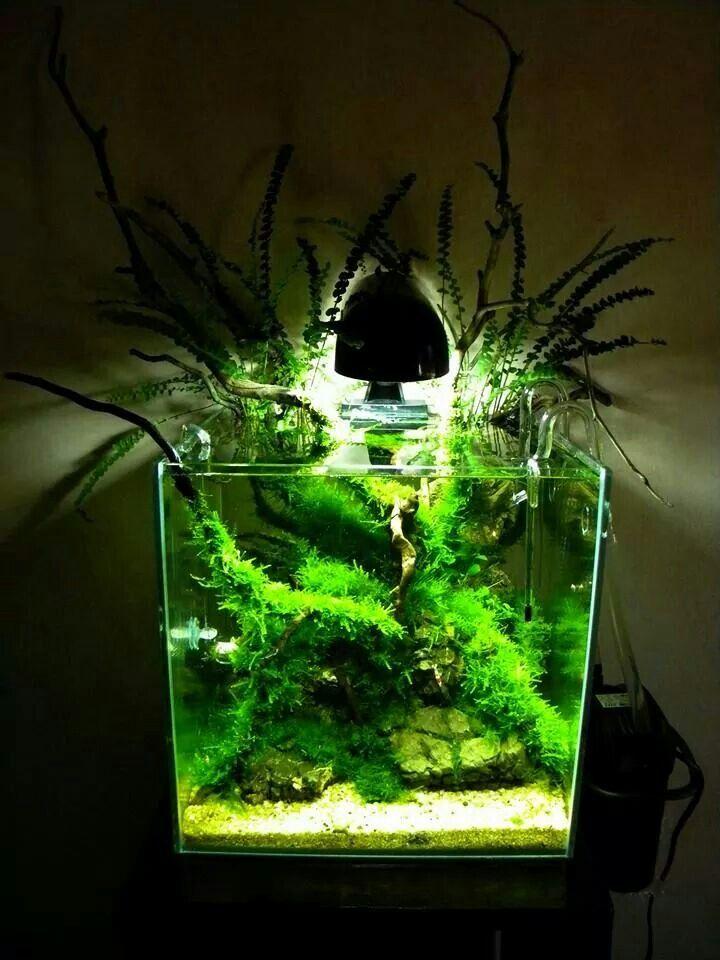 Les 234 meilleures images du tableau planted aquarium sur for Nano aquarium poisson