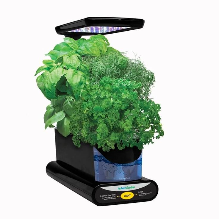 Sprout With Images Aerogarden Led Grow Lights 400 x 300