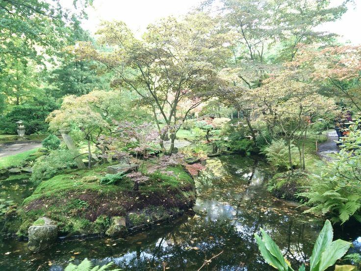 Japanse tuin