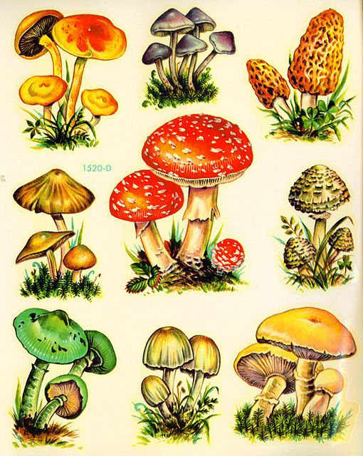 Vintage kitsch mushrooms.