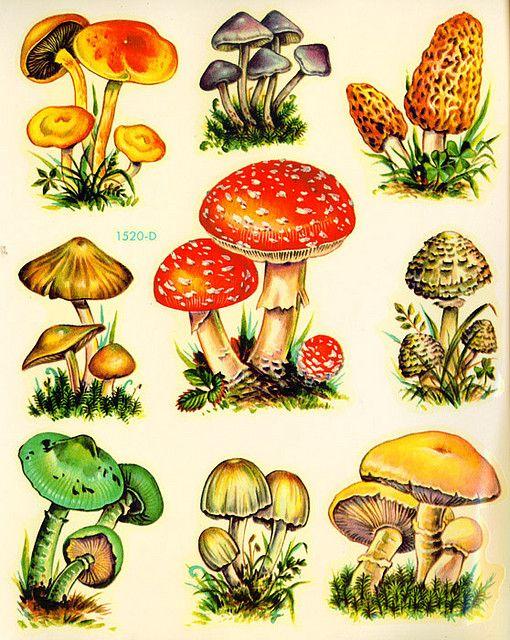 Vintage kitsch mushrooms.