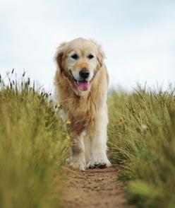 #Pet care tips