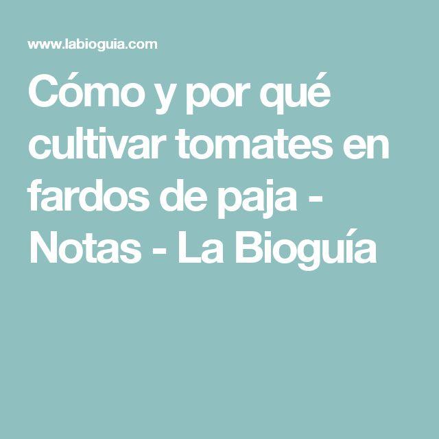 Cómo y por qué cultivar tomates en fardos de paja - Notas - La Bioguía