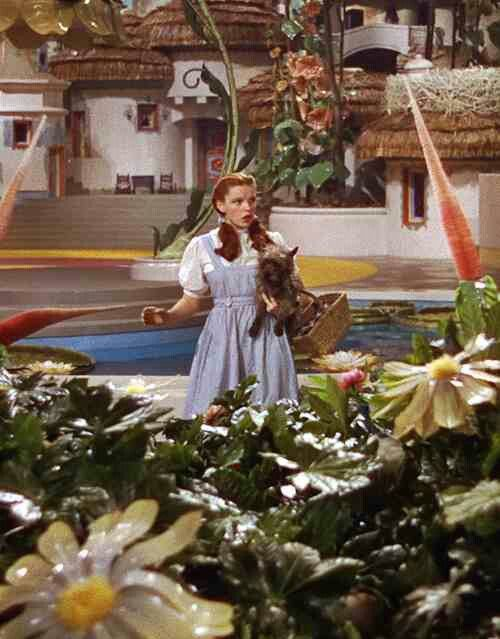 331 best images about the wizard of oz on pinterest