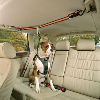 Kurgo Black Auto Zip Line Dog Seat Belt at PETCO