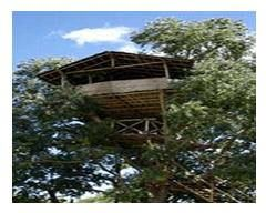 Jungle Retreat - Masinagudi - Tamilnadu