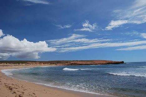 Barrow Island Western Australia - Google Search