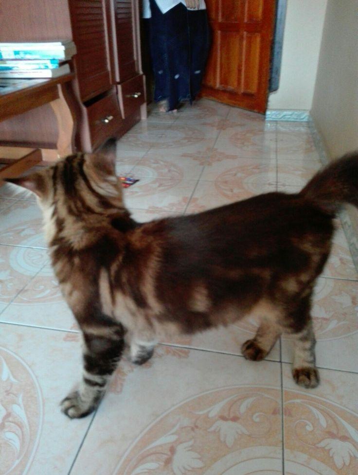 my Cat fidel boy