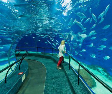 Will we visit the Shanghai Ocean Aquarium on our luxury China trip? #luxChina