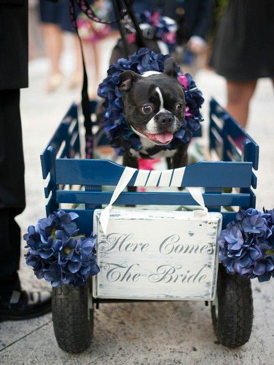 95 best Dog Wedding images on Pinterest Dog wedding Doggies and
