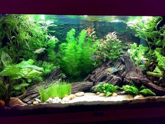 202 best aquarium setups images on pinterest for Awesome betta fish tanks