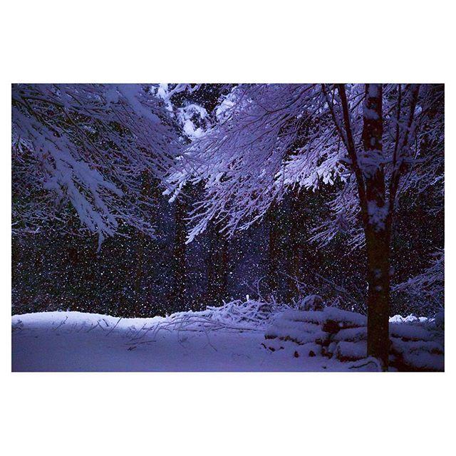 【wingsfield_inst】さんのInstagramをピンしています。 《#森 の中 #光 が射し込んで #木々 が #輝いて いました #雪 が絶え間無く降っています。#雪景色 #自然 #氷点下 #BelowFreezing #大仙市 #秋田 #japan》