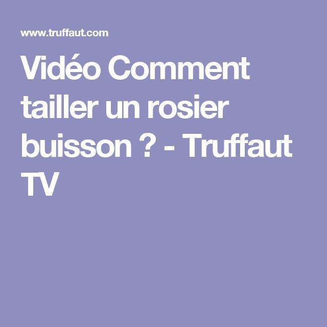 best 25 rosier buisson ideas only on pinterest fleur rouge d amour fleur and bouquet de. Black Bedroom Furniture Sets. Home Design Ideas