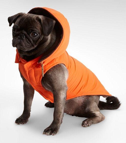 How cute is this little orange doggie rain vest?