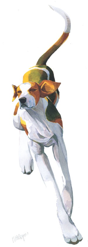 Foxhound II by Mary Ann Rogers - This my Dale... He is happiest when his ears are flappin in the wind :)