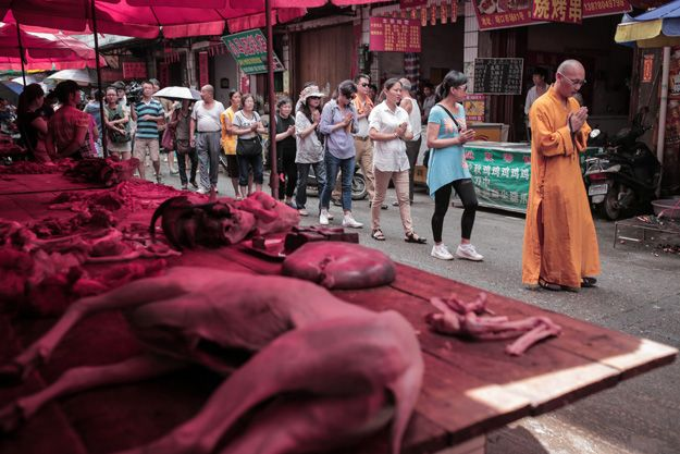 Photos: Yulin, China's Dog Meat-Eating Festival of 2014 | The New Republic