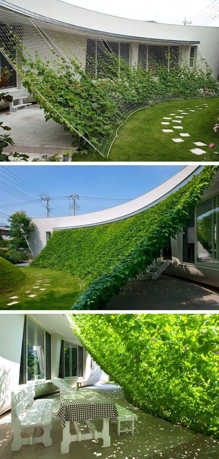 Amazing idea! Especially with ivy. Our ivy grows so fast too. Natural canopy from the sun. :-)