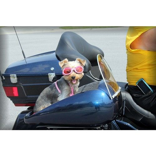 Dog Carriers For Motorcycles Motorcycle Dog Carrier Pet