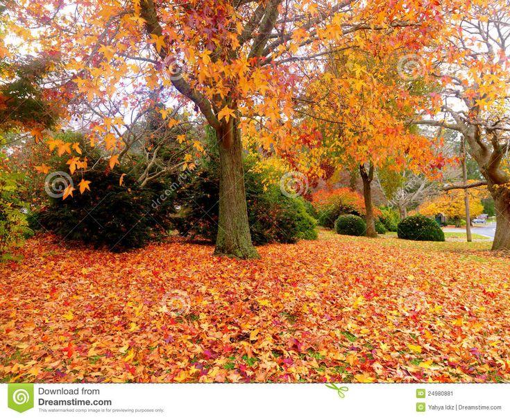 Autumn+garden+design   Golden autumn garden on the town of Olinda Australia.