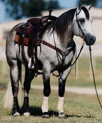 Grey quarter horse. I will have you one day!!!
