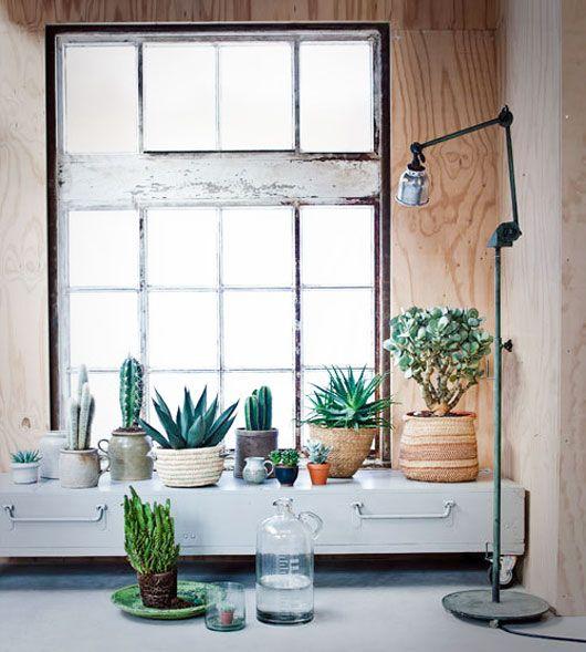 542 besten \WOHNEN Bilder auf Pinterest Zimmerpflanzen - pflanzen deko wohnzimmer
