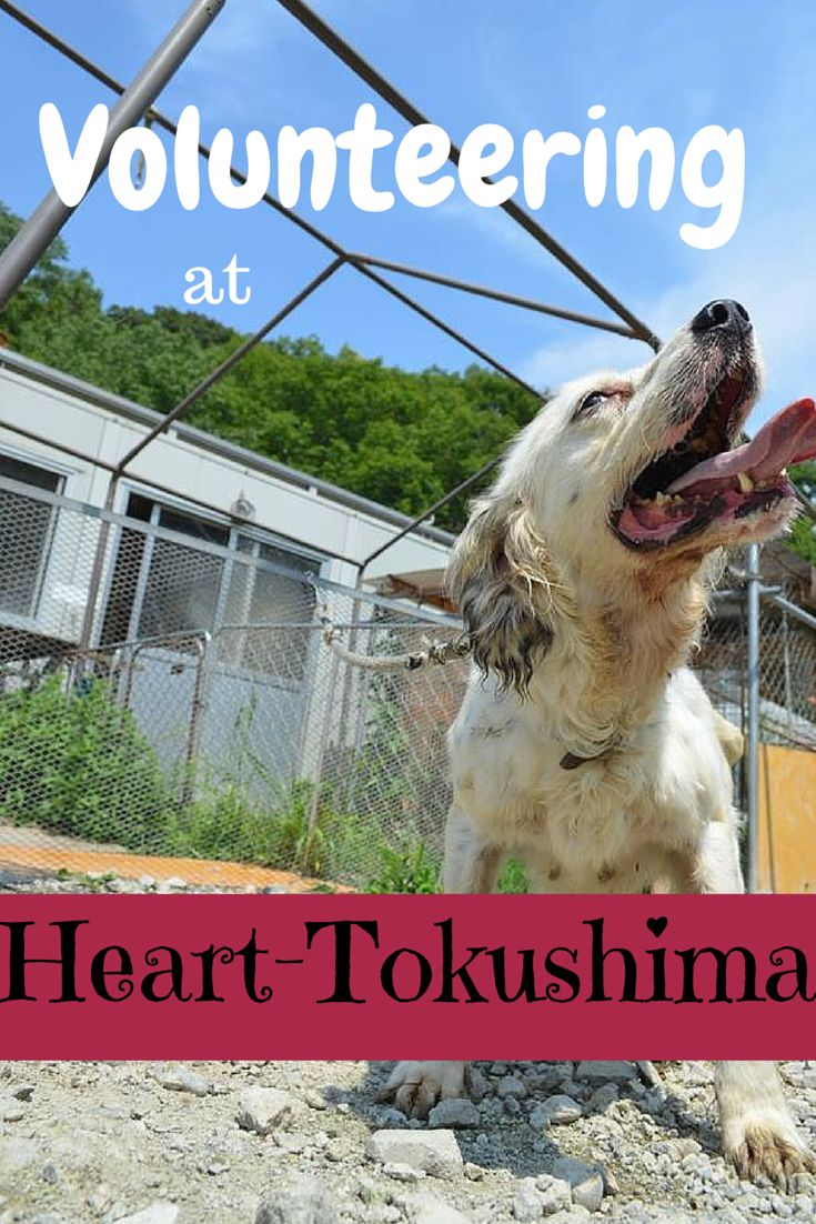I volunteered for 3 weeks at an animal shelter in Tokushima, Japan. In desperate need of money, volunteers, and supplies, this little shelter is doing it's best to save animals from the kill shelters in the area. It's definitely something I strongly recommend people to do or help in some other way. #japan #animals #dogs #volunteer