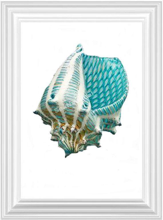 Illustrazione di vita di mare turchese 6 nautico stampa arte illustrazione disegno Poster digitale stampa arte parete arredamento parete appeso a parete di Shell